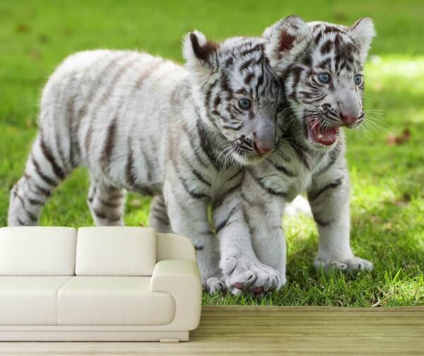 Vlies Tapete XXL Poster Fototapete Tiger Babys weiß