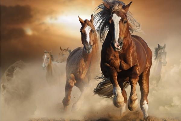 Magnettafel Pinnwand Bild Pferd Pferdeherde Haftlinger