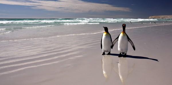 Magnettafel Pinnwand Bild XXL Panorama Pinguin Pinguine