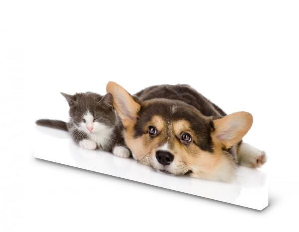 Magnettafel Pinnwand Bild Hund Katze Babykatze XXL gekantet