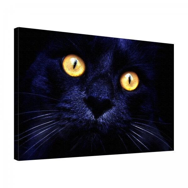 Leinwand Bild edel Tiere Schwarze Katze