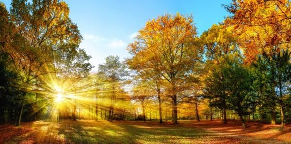 Magnettafel Pinnwand Bild XXL Panorama Natur Herbst Bäume
