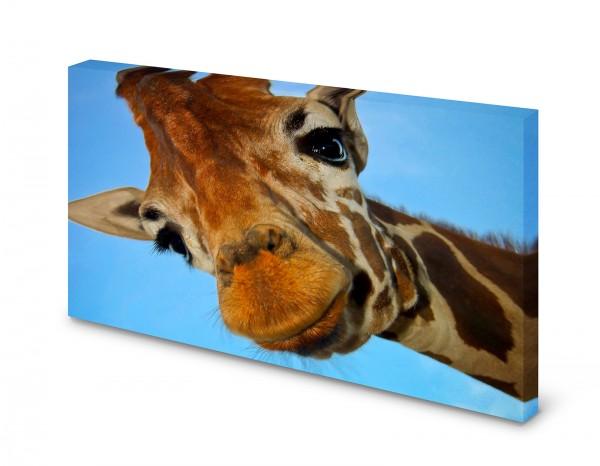 Magnettafel Pinnwand Bild Giraffe Himmel XXL gekantet