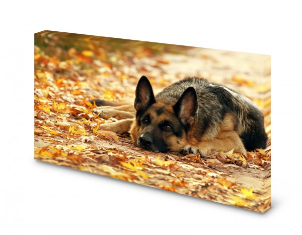 Magnettafel Pinnwand Bild Schäferhund Hund XXL gekantet