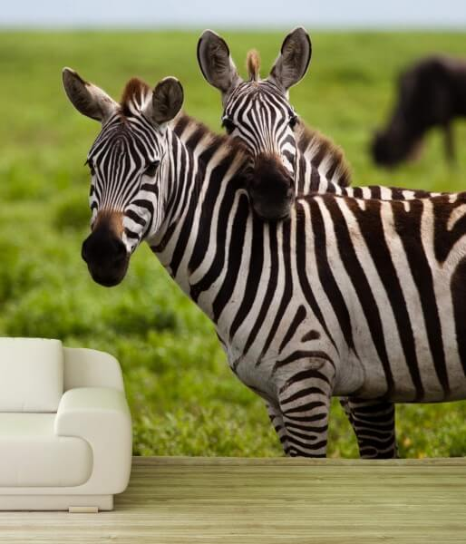 Vlies Tapete XXL Poster Fototapete Afrika Wildnis Zebra Love