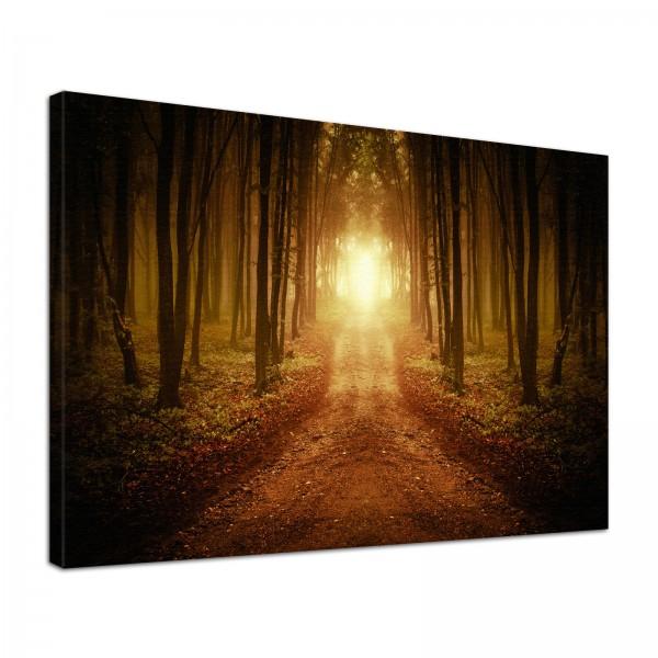 Leinwand Bild edel Natur Wald Einsamer Weg ins Licht