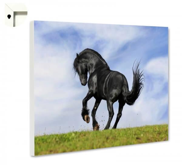 Magnettafel Pinnwand Pferd schwarz wild