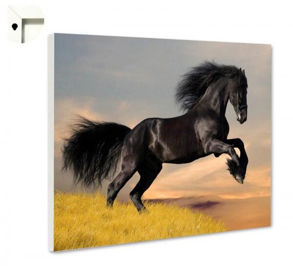 Magnettafel Pinnwand Tiere Pferd