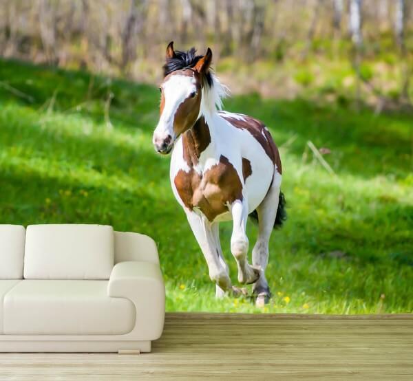 Vlies Tapete XXL Poster Fototapete Pony Pferd Schecke