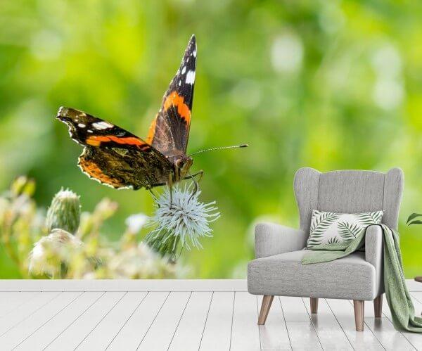 Vlies Tapete XXL Poster Fototapete Natur Schmetterling