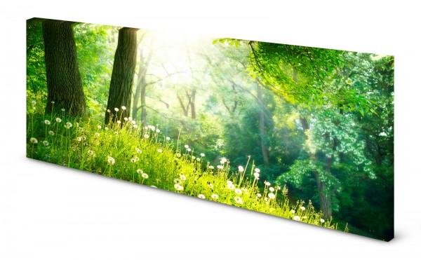 Magnettafel Pinnwand Bild Wald Lichtung Sonnenschein Waldwiese gekantet