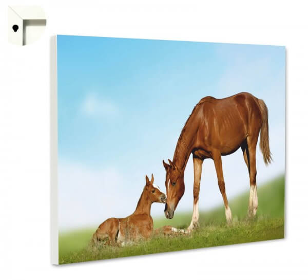 Magnettafel Pinnwand Tiere Pferd & Fohlen