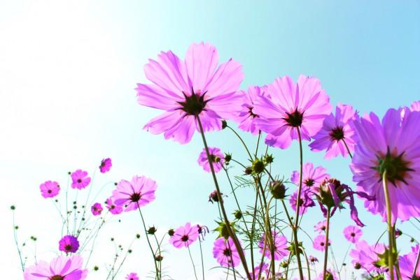 Magnettafel Pinnwand XXL Bild Blumen Sommer Himmel