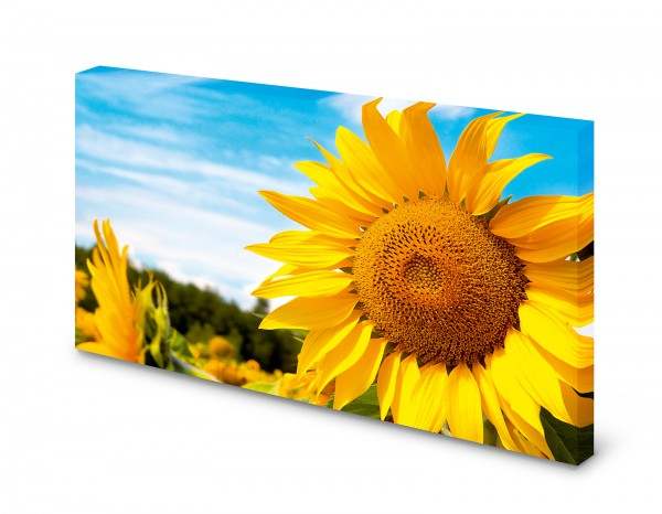 Magnettafel Pinnwand Bild Sonnenblume Sonnenblumenfeld