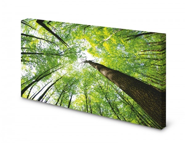 Magnettafel Pinnwand Bild Wald Laubwald Horizont gekantet XXL