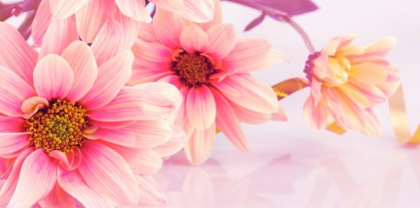 Magnettafel Pinnwand Bild Panorama Blumen Blüten Landhaus