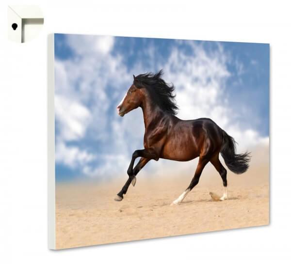 Magnettafel Pinnwand Tiere Pferd Galopp