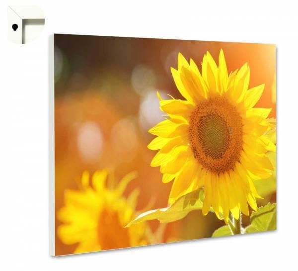 Magnettafel Pinnwand Sonnenblumen im Sonnenschein