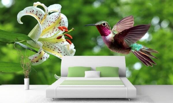 Vlies Tapete XXL Poster Fototapete Exot Vogel Blume Kolibri