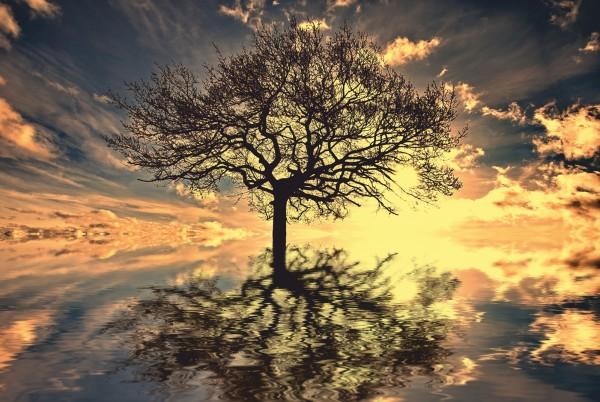 Magnettafel Pinnwand Magnetbild Lebensbaum Esoterik