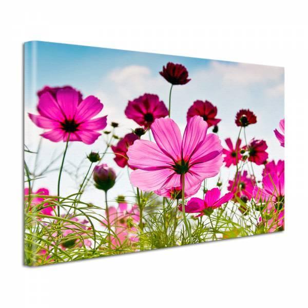Leinwand Bild Natur & Blumen Blüten Wiese in Magenta