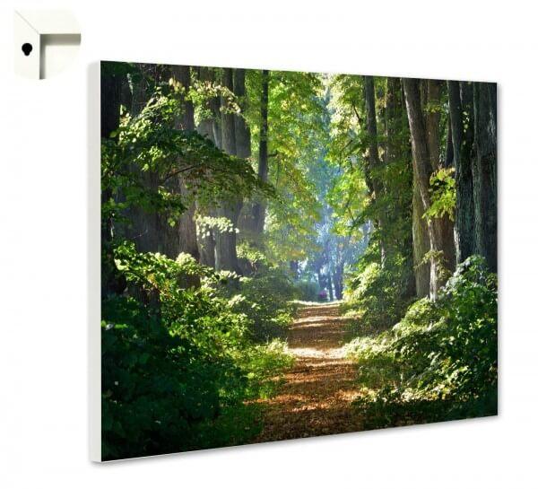 Magnettafel Pinnwand Natur Wald Weg
