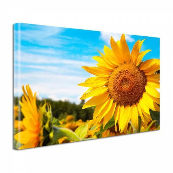 Leinwand Bild Natur & Blumen Sonnenblumen Feld