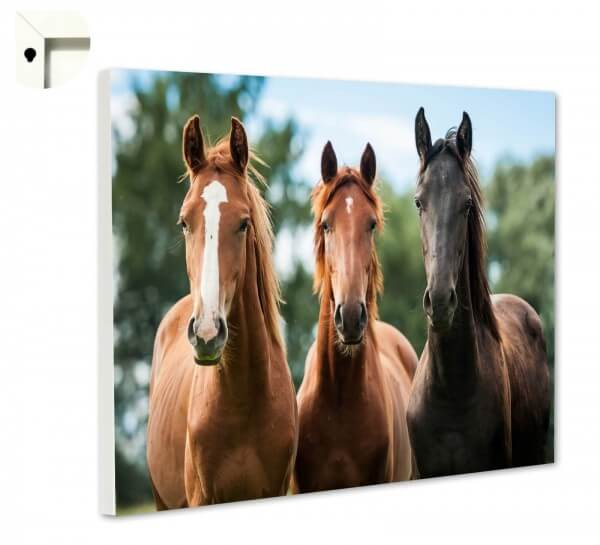 Magnettafel Pinnwand Tiere Pferde Trio
