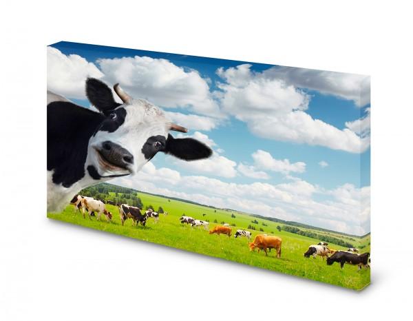Magnettafel Pinnwand Bild Kuh Kuhherde Holsteiner Rind gekantet