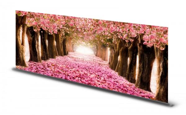 Magnettafel Pinnwand Bild Allee Bäume Kirschblüte rosa gekantet