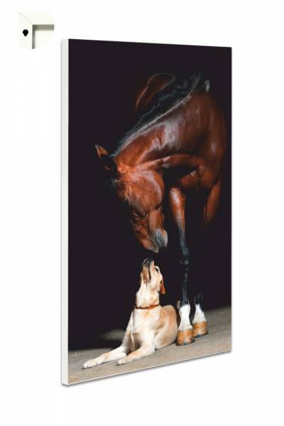 Magnettafel Pinnwand Tiere Pferd & HundFreunde