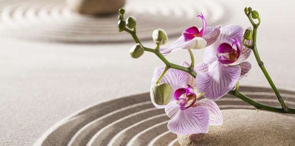 Magnettafel Pinnwand Bild XXL Panorama Orchidee Sand Zen Steine