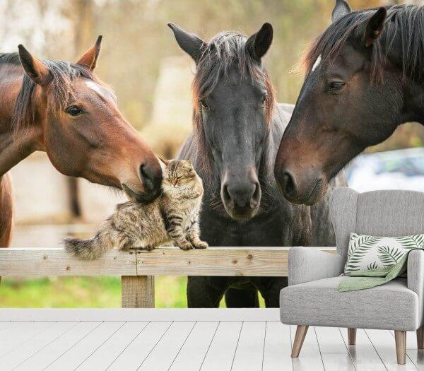 Vlies Tapete XXL Poster Fototapete Pferde Katzen Freunde