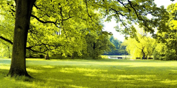 Magnettafel Pinnwand Bild XXL Panorama Natur Park See Linde
