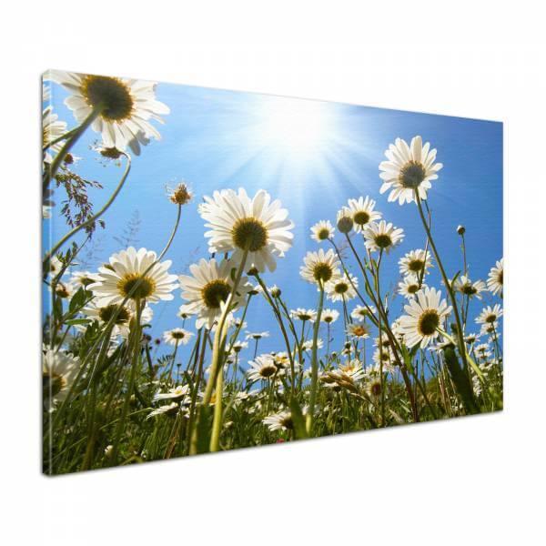Leinwandbild Bild Wandbild Blumen Margeriten im Sommerhimmel