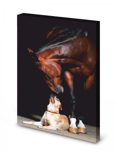 Magnettafel Pinnwand Bild Hund Pferd Freunde XXL gekantet