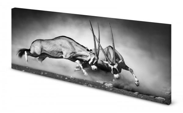Magnettafel Pinnwand Bild Antilope Gemsbok Kampf gekantet