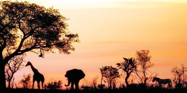Vlies Tapete XXL Poster Fototapete Panorama Afrika Safari