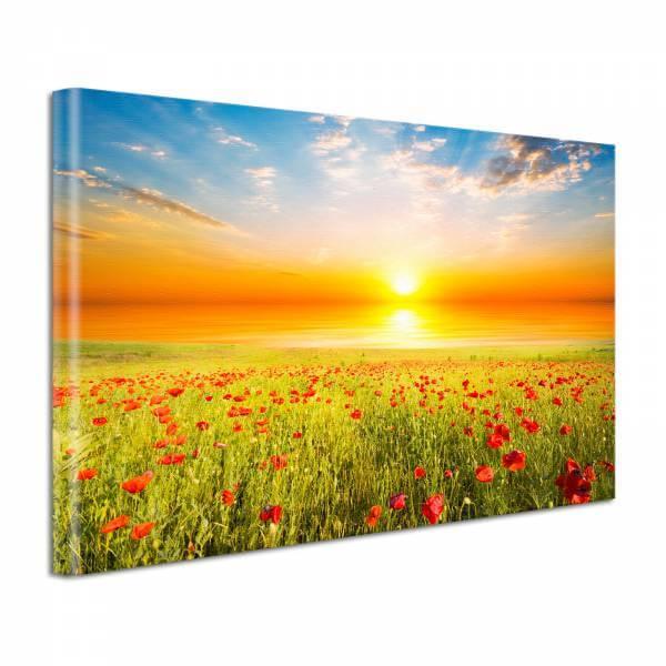 Leinwand Bild edel Blumen Sonnenuntergang im Mohnfeld