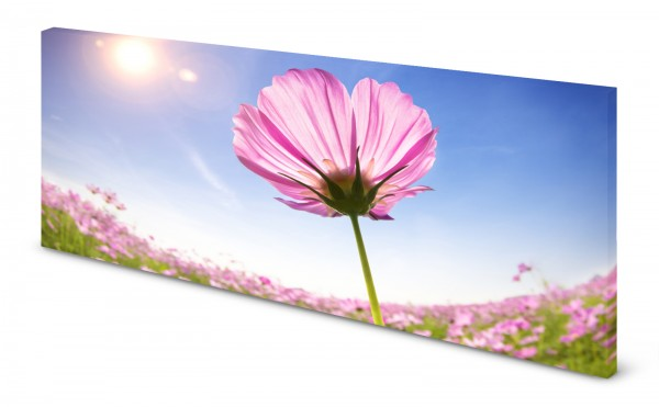 Magnettafel Pinnwand Bild Sommerblume Blume Himmel gekantet