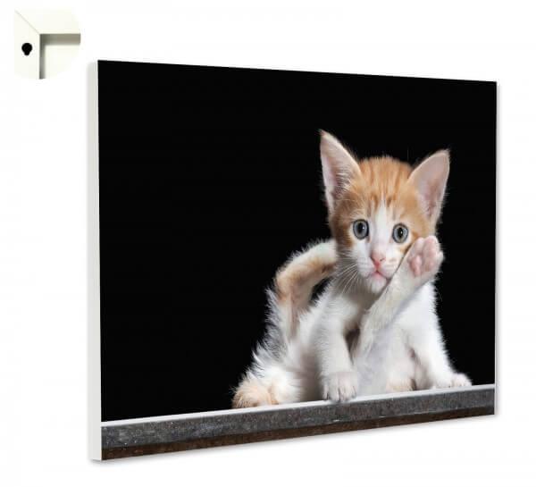 Magnettafel Pinnwand Memoboard Tiere kleine Katze