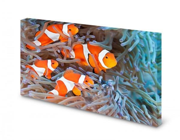 Magnettafel Pinnwand Bild Clownfisch Fisch Anemone gekantet