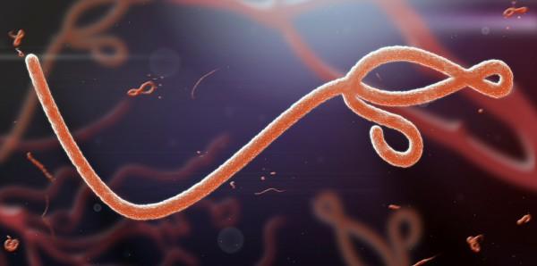 Magnettafel Pinnwand Bild XXL Panorama Ebola Virus Mikroskop