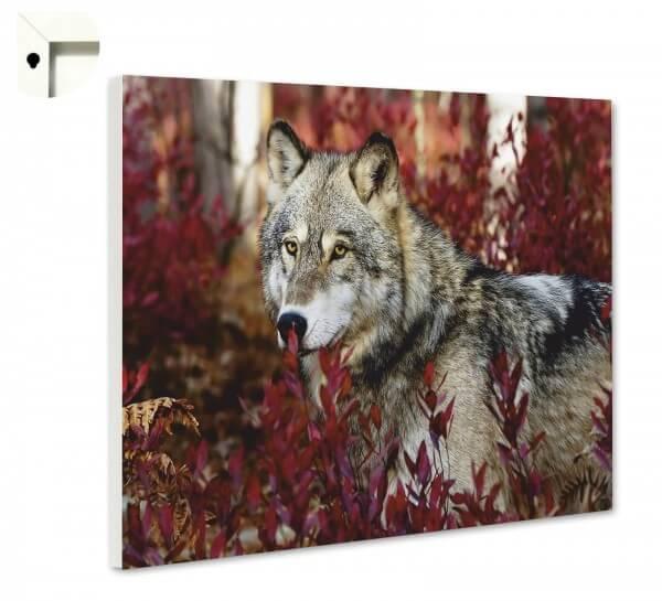 Magnettafel Pinnwand Tiere Wolf