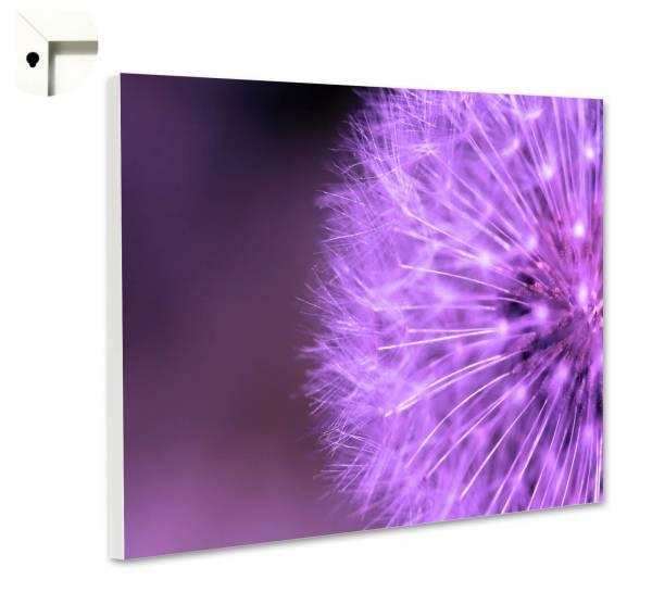Magnettafel Pinnwand Blumen Natur Lila Pusteblume