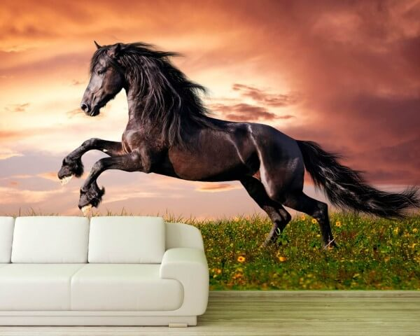 Vlies Tapete XXL Poster Fototapete Pferd wild