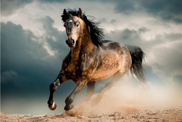 Magnettafel Pinnwand XXL Bild Pferd Wildnis Galopp