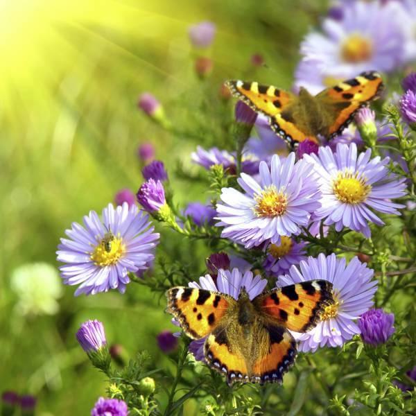 Vlies XXL-Poster Fototapete Natur & Blumen Schmetterlinge