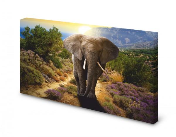 Magnettafel Pinnwand Bild Elefant Elefantenbulle XXL gekantet