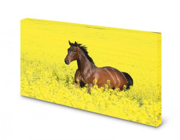 Magnettafel Pinnwand Bild Pferd Brauner Rapsfeld XXL gekantet